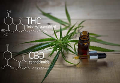 Cannabis THC vs CBD - Learn from Dr. Berg